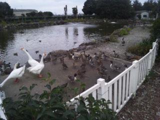 楽園渡り鳥シーズン2