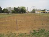 H23.4.15 庭桜1