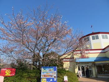 25桜(Gsレストラン)