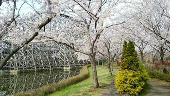 20160406レジーナ横遊歩道の桜-1