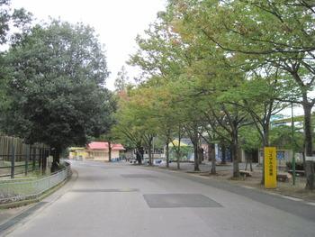 24 ケヤキ(リスザル付近)