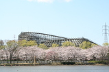 桜と木製コースター「レジーナ」