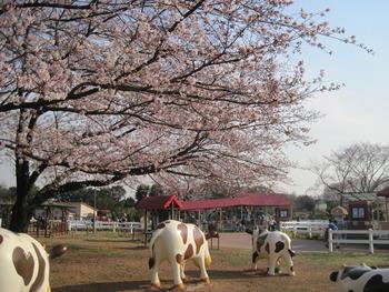 30桜(ハートフルファーム)