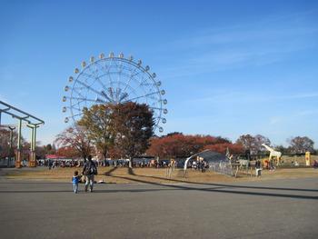 25 紅葉(トッピー広場)