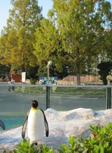 H22.11.12ペンギンとメタセ
