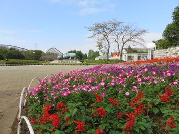 6東ゲート花壇