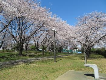 2020.3.24桜1