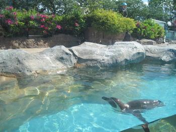 12 ペンギンとツツジ2