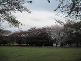 H23.4.18 トッピー広場(バク舎前)