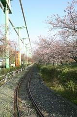 線路から八重桜