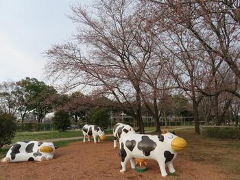 24桜(ファーム)1