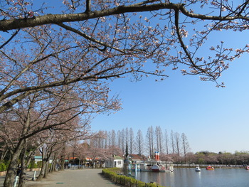 25桜(東ゲート)