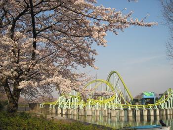30桜(カワセミ)