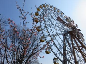 28河津桜(チーズ風車)
