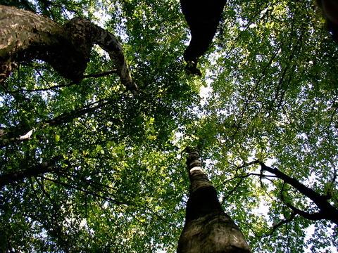 trees-1556765-640x480
