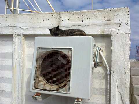 cat-resting-on-air-conditioner-1203453-640x480