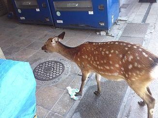 KIMG0284鹿