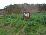 菜の花4月�