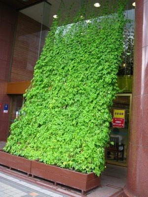 川口そごうの緑のカーテン
