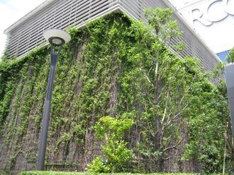 浦和パルコ前の緑のカーテン