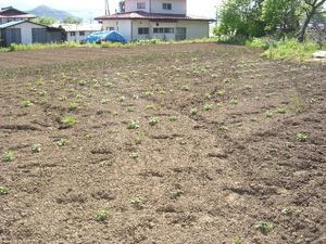 戸田市民農園