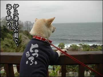 伊豆の思ひ出-5コマ