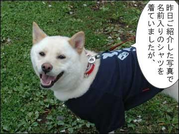 名前入りシャツ-1コマ