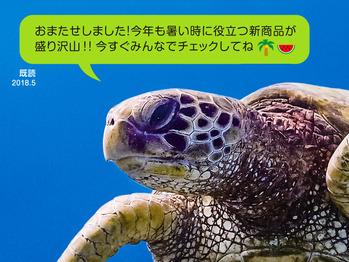 01_ウミガメの表紙