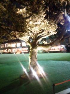 0128-8 明治記念館 ライトアップの木