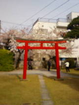 4-21桜と鳥居