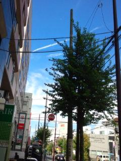 1103-8秋空街路樹