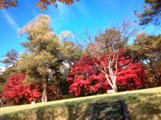 1115-2日光の紅葉1