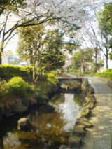4-21桜と小川