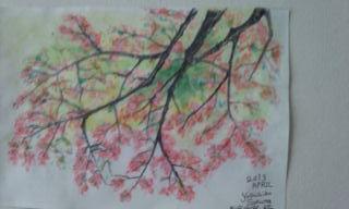 桜のスケッチ