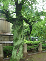 ほんとに緑な木