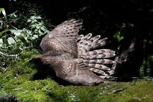 0826-6羽根を広げる