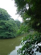 お堀の水も緑