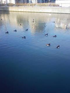 水辺の鳥3