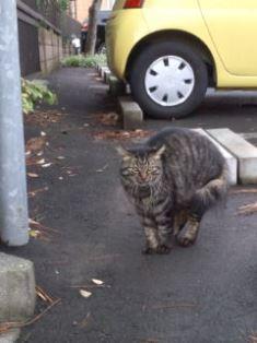 1021-2駐車場の猫