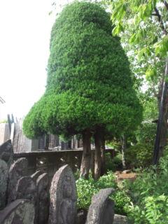 0511-5 刈られた木・石仏