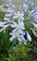 7-4-3梅雨の花
