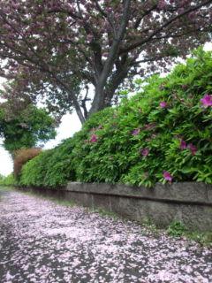 0428-4花の道