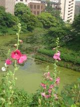 夏っぽい花
