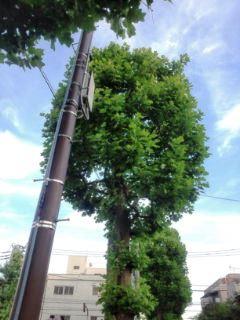 0617-8丸い木