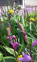 4-23春の花