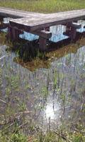 4-23春の水辺
