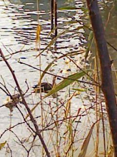 水辺の鳥1