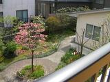 2階より中庭を眺め