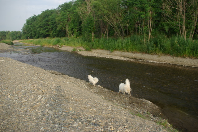 帯広川 水遊び