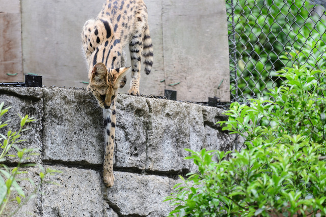 Tama-Zoo-0336